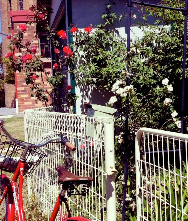 Speedwell and rose garden