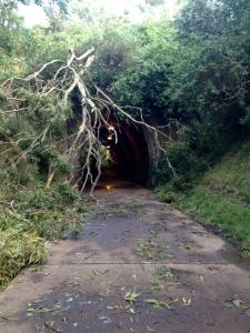 Tunnel on Fernleigh Track